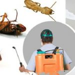 Exterminator Services, When Do I Need Them